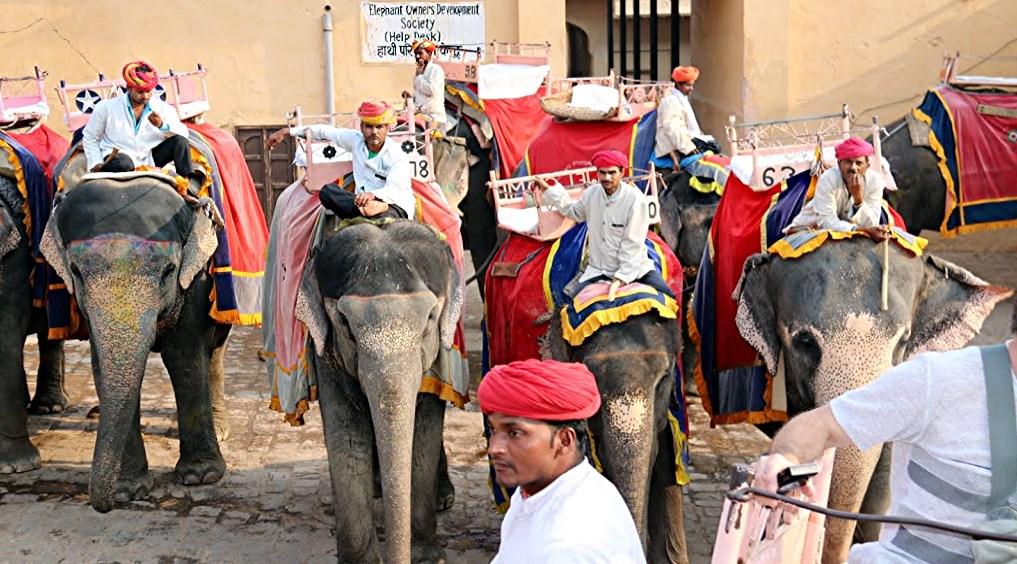 610%20Jaïpur%20éléphants