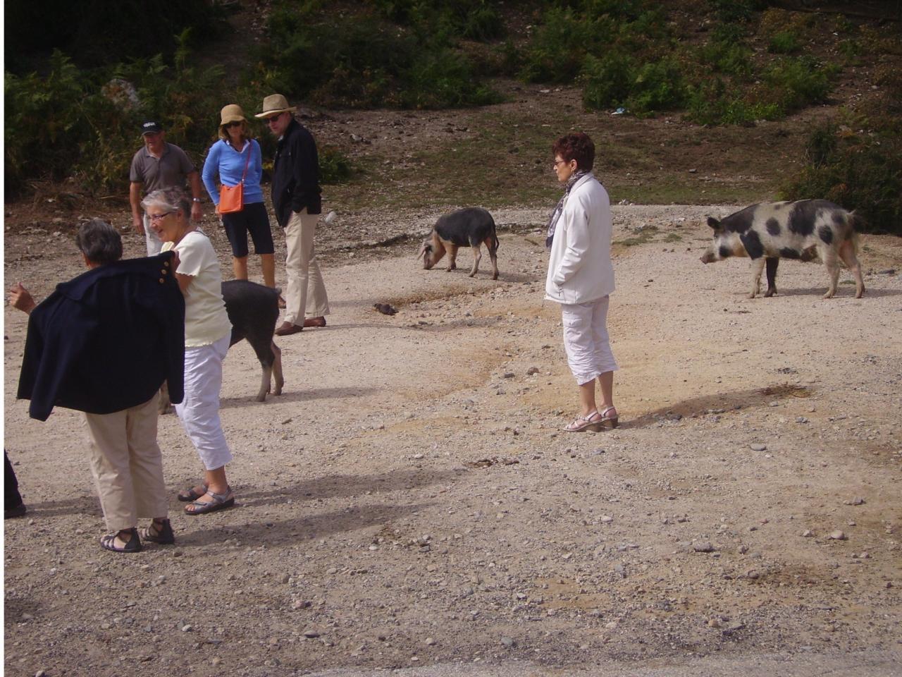 Corse 14-21 sept 2013 (27)