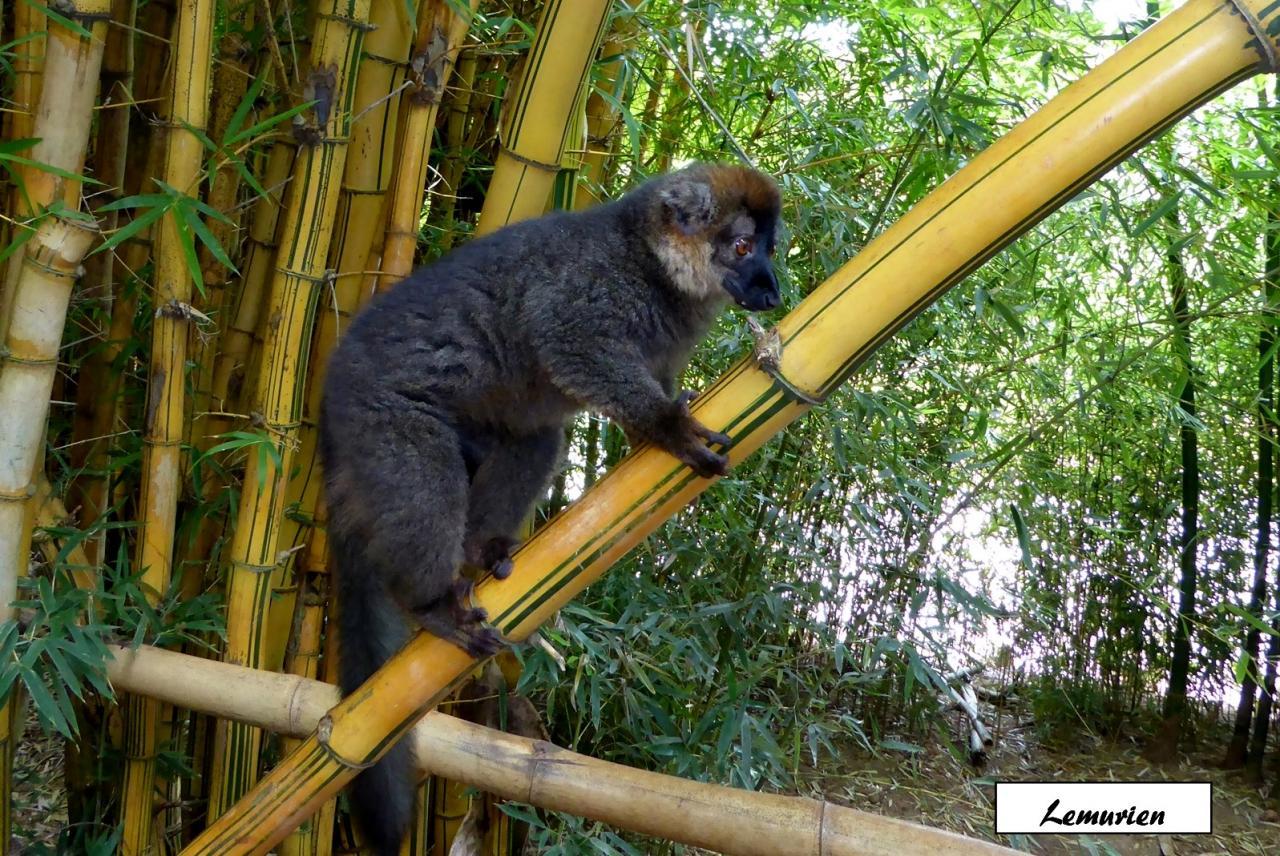 P1000483.lemuriens