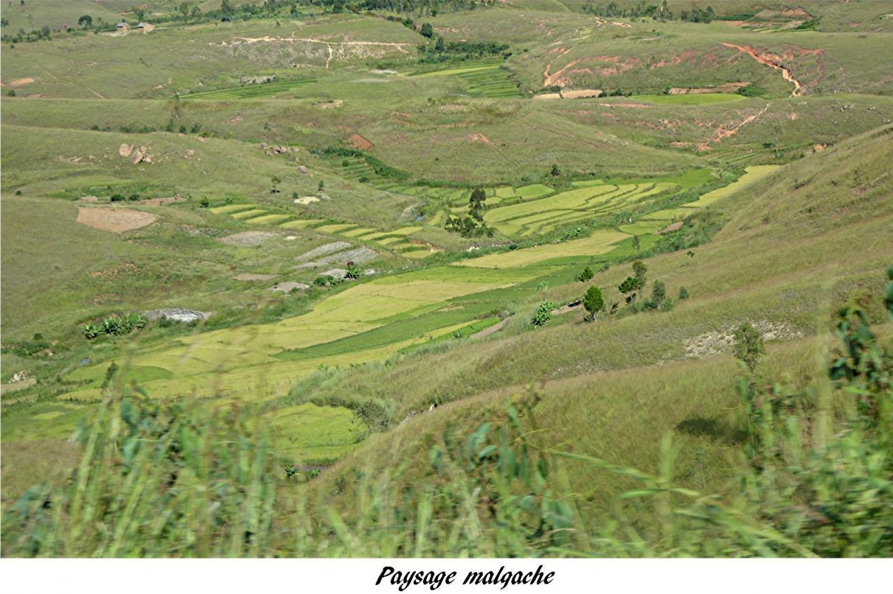 P1000649.paysage malgache