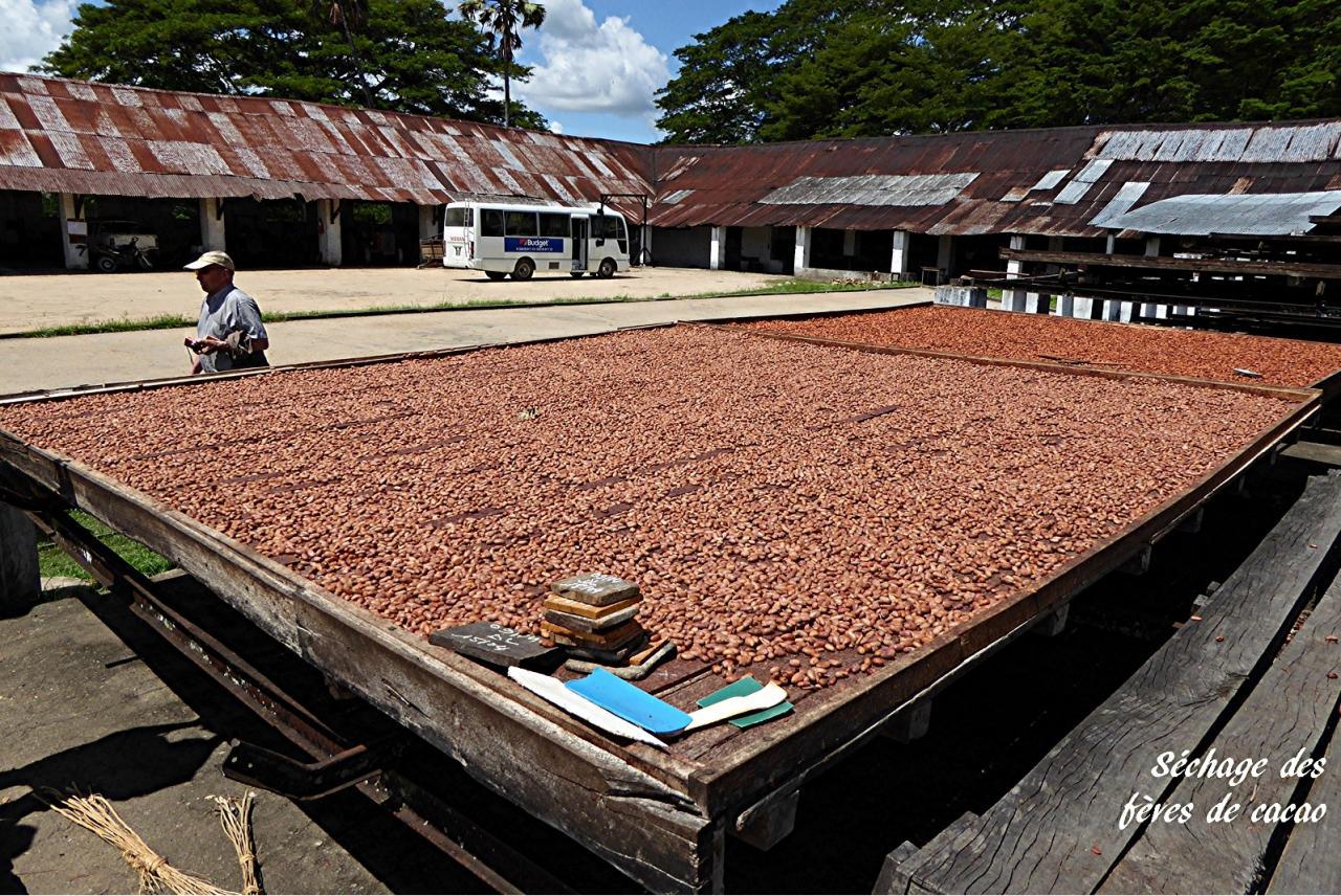 P1000805.sechage des feves de cacao
