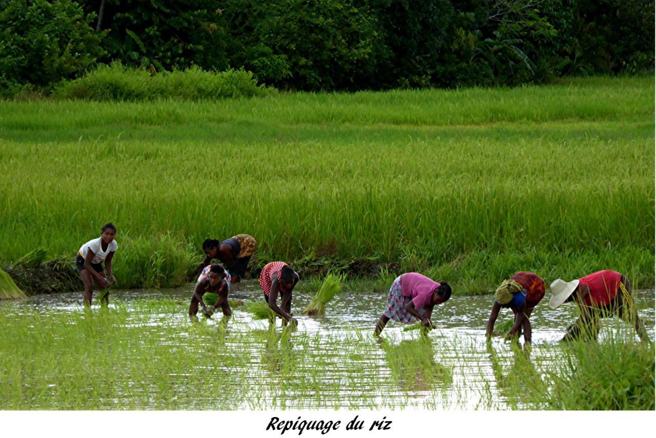 P1000835.repiquage du riz